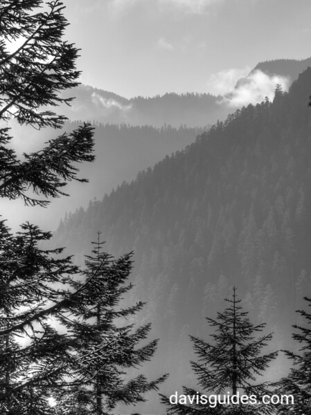 Mist in the valley at Mount Rainier National Park