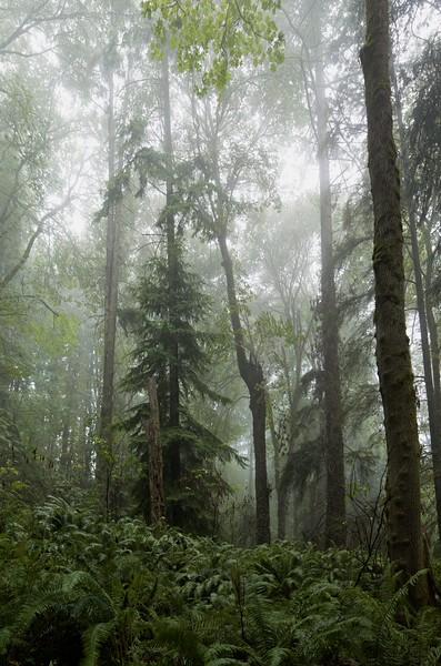 Dead tree in the rain