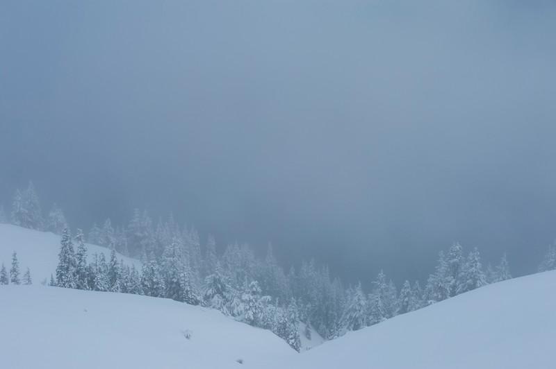 Snow on Hurricane Ridge