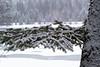 Snowy branch v 2
