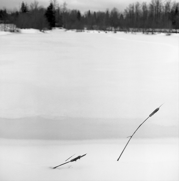 Two cattails and a frozen lake
