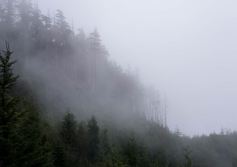 Forest Fog near Cape Flattery