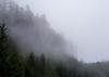 Forest Fog near Cape Flattery