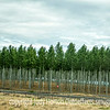 Washington Tree Farm