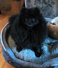Here's a close-up of Bear. The picture's a little fuzzy, but then, so is Bear.
