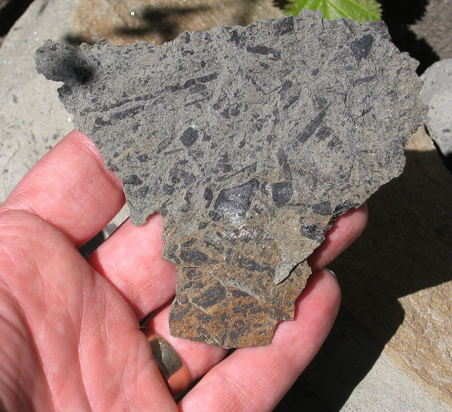 There were some nondescript bits of fossilized leaves.