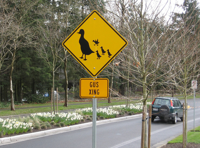 This sign reminded us of our cat Gus, although he will never have Guslings, never goes outside to cross the street, and is not a duck.