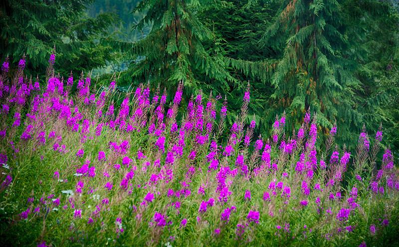 landscapes, botanicals,