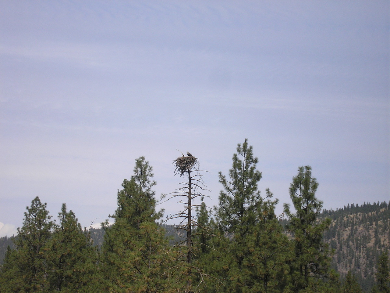 This is an Ospre nest that we passed everytime we went to town.
