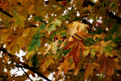 Seattle-Fall-20121031-02-2