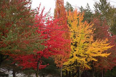Seattle-Fall-20121017-06-2