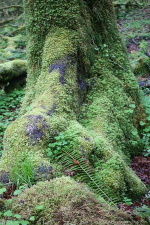 HohRainForest-20120506-075-15