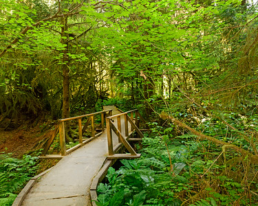 Watershed Park, Olympia, Washington