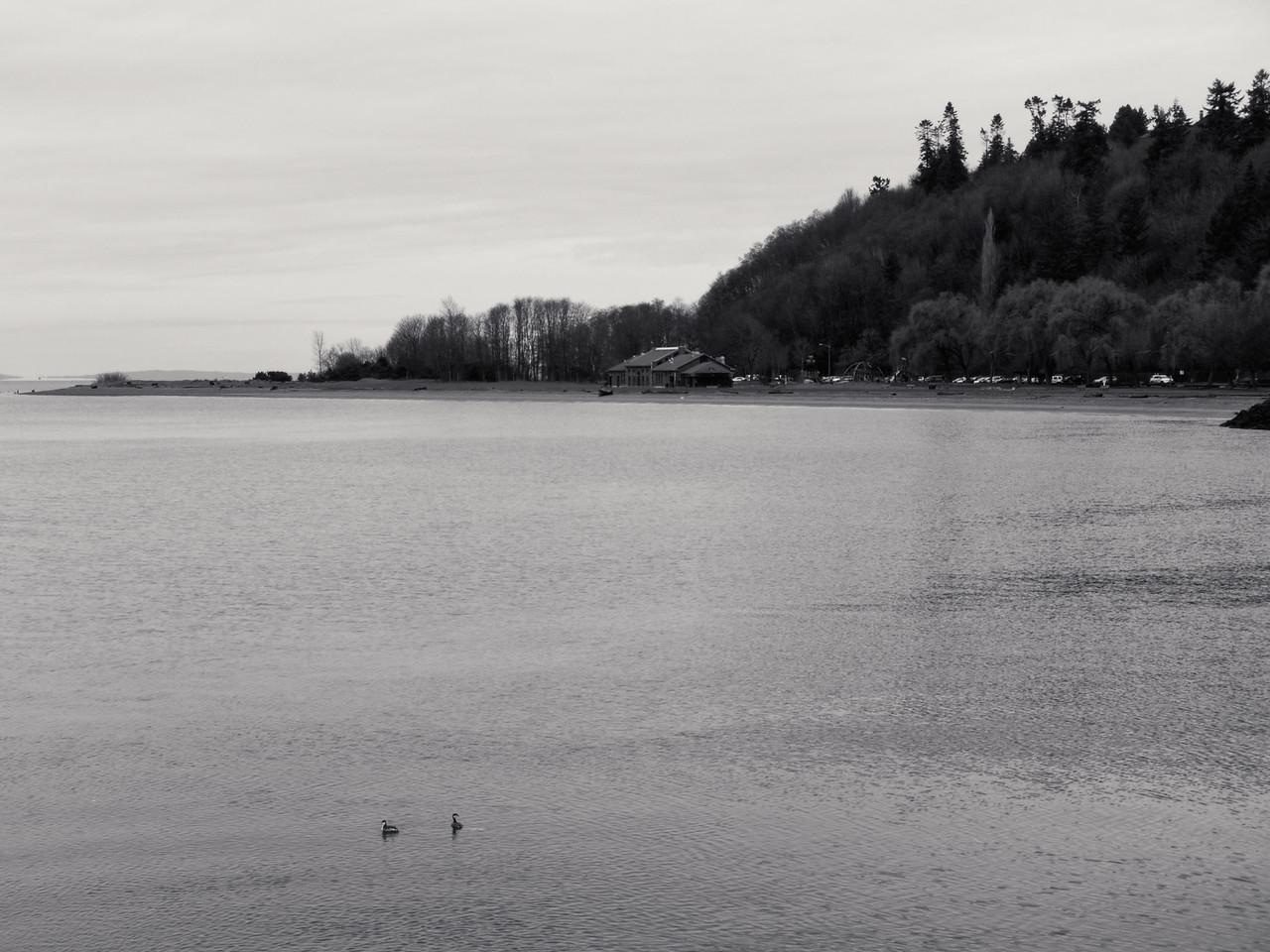 20151226.  View of Golden Gardens Park from Corinthian Yacht Club, Seattle WA.