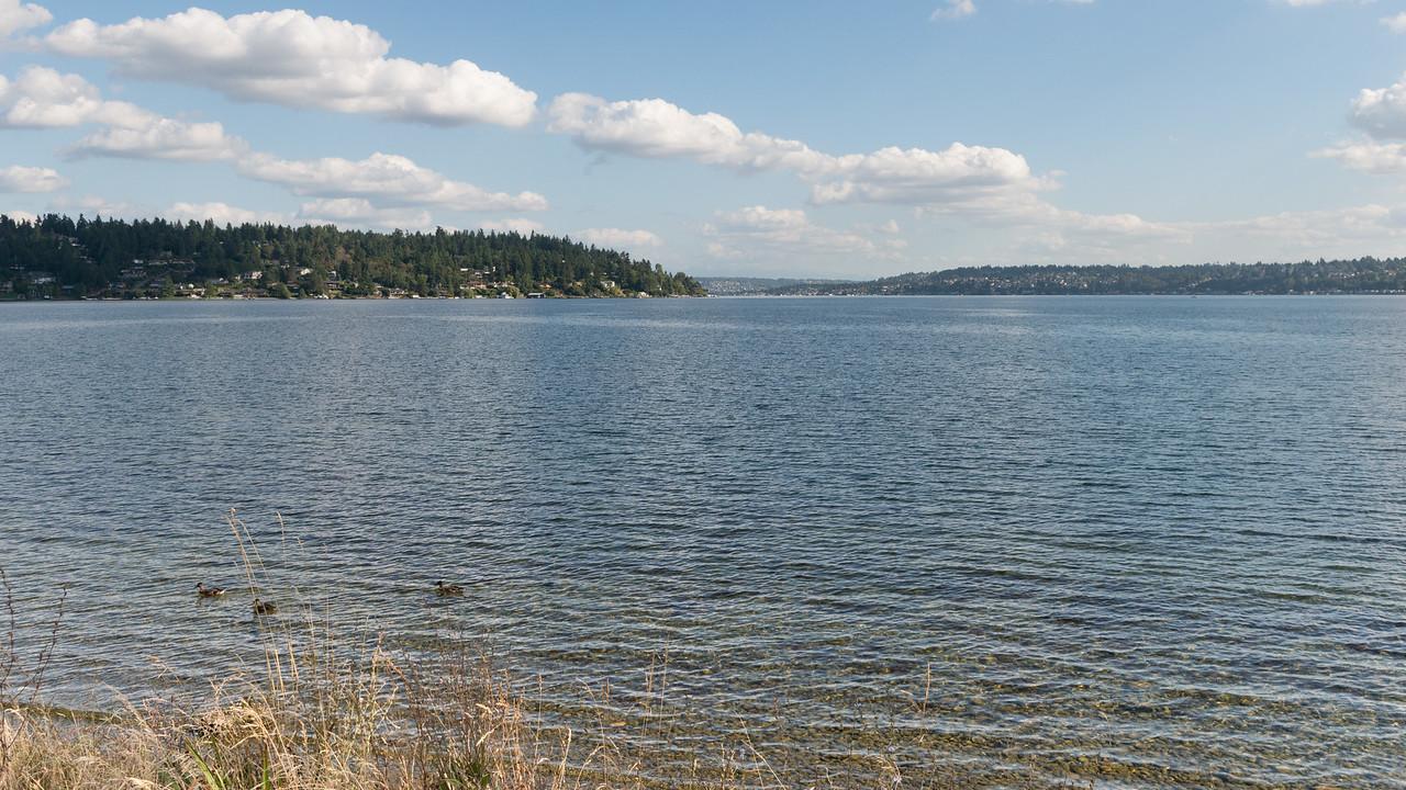 20150821.  Lake Washington from Seward Park, Seattle WA.