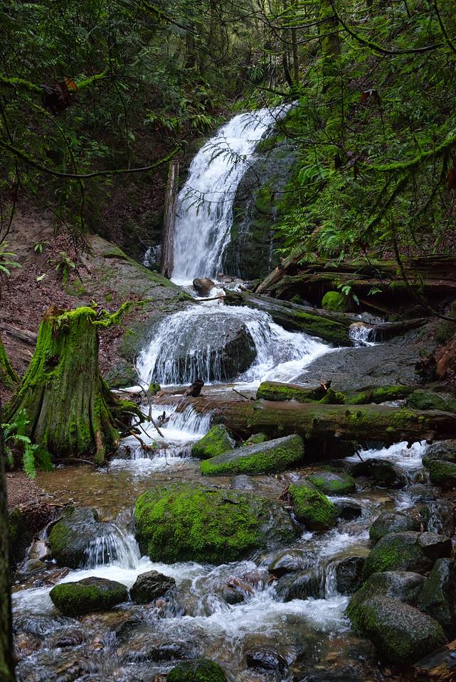 20151228.  Cougar Mountain Regional Wildland Park, Bellevue WA.