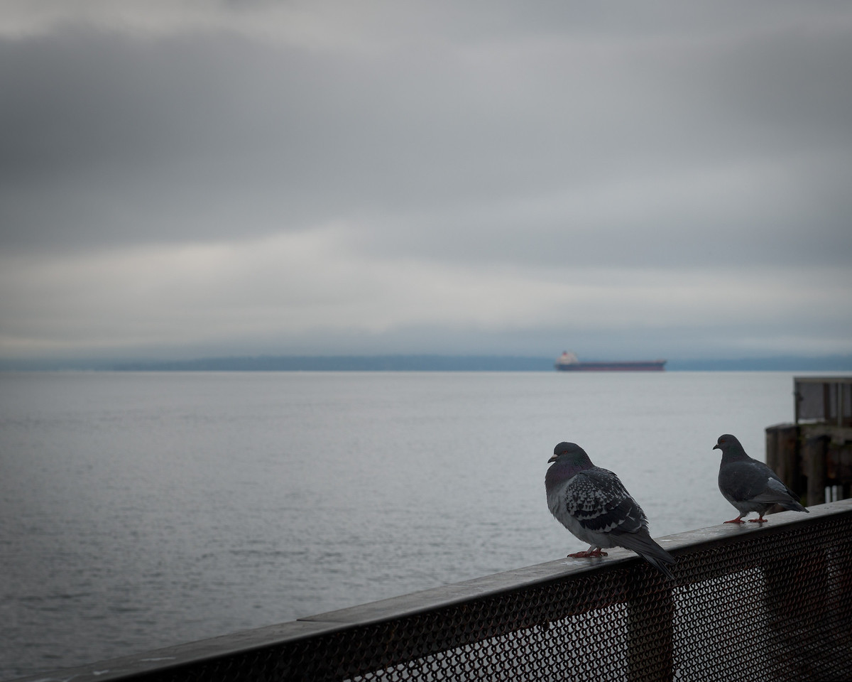 28 December 2013.  Pidgeons at end of Pier 63 on Seattle waterfront.