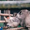 Rhino - Olympic Game Farm, Sequim, WA  - May 1998