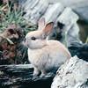 Rabbit - Olympic Game Farm, Sequim, WA  - May 1998