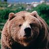 Bear - Olympic Game Farm, Sequim, WA  - May 1998
