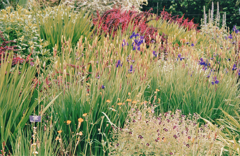 Meadow of Wildflowers - Bellevue Botanical Garden  5-29-98