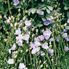So Many Blooms - Bellevue Botanical Garden  5-29-98