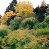 Bellevue Botanical Garden  5-29-98