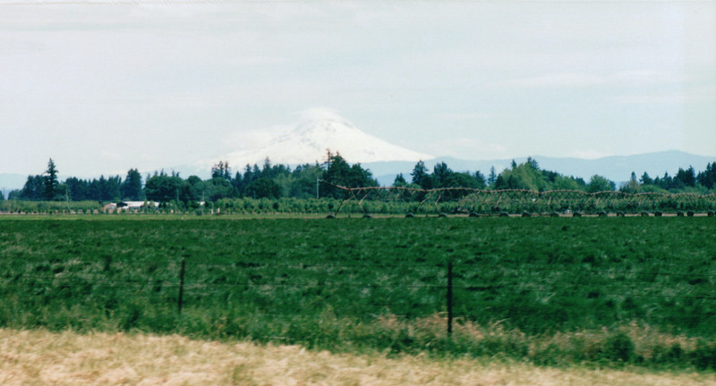 Mount Ranier, An Hour Out From Seattle, WA  - May 1998