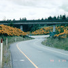 Flowers Along the Washington State Highway - May 1998