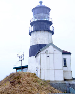 Deer at Cape Disappointment Lighthouse - Cape Disappointment - Washington Travel Photography - USA