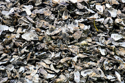 Oyster shells - Oysterville - Washington Travel Photography - USA