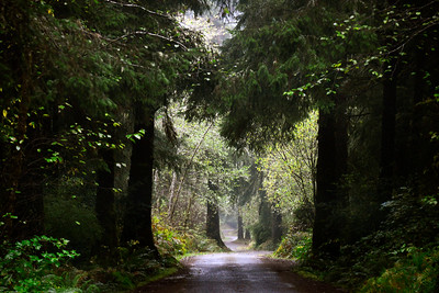 Sherwood Forest on the way to Leadbetter Point - Washington Travel Photography - USA