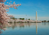 Washington Monument during Cherry Blossom Festival from across Tidal Basin.