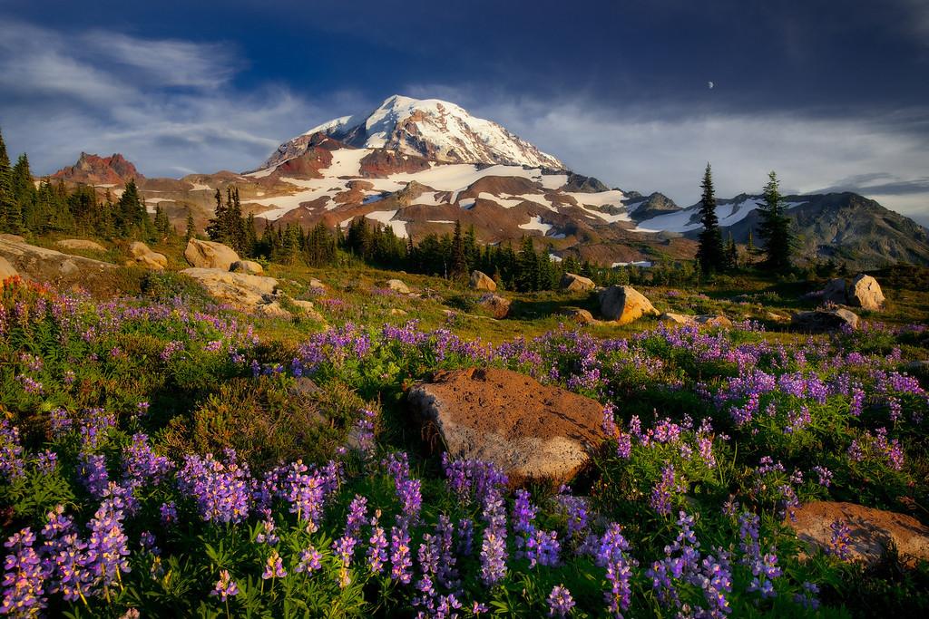 Mt. Rainier, wildflowers, and moon.