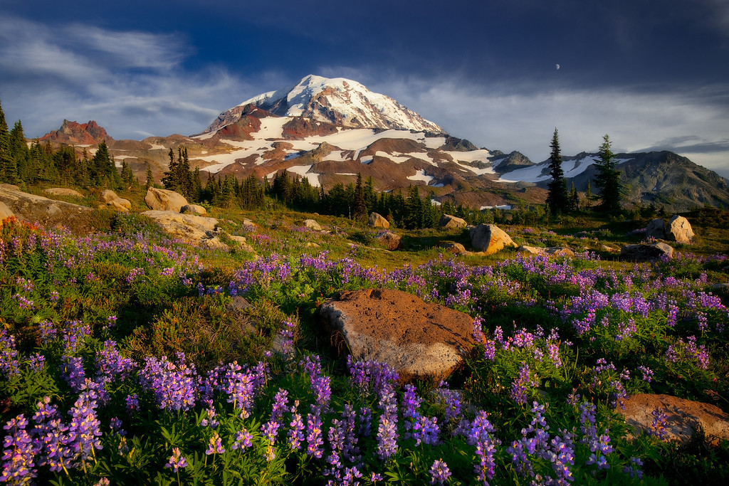 Mt. Rainier, wildflowers, and moon.