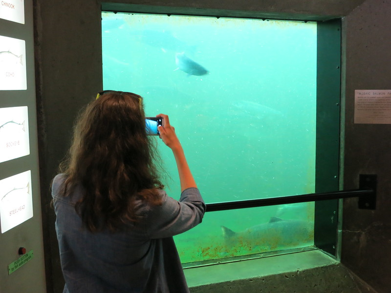 Then we went to the locks and watched the salmon swimming upstream; this is Casey taking a picture of fish.