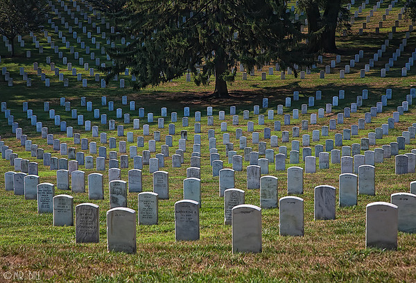 Graves @ Arlington National Cemetery