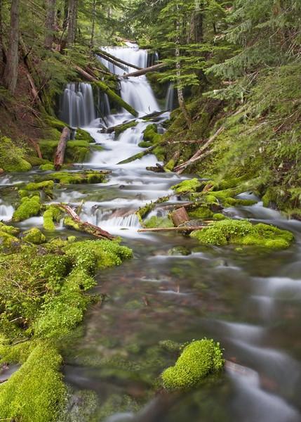 Stream in the wilderness of Mount Adams