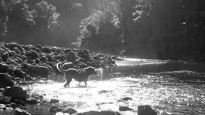Tararua Ranges - Kaitoke end