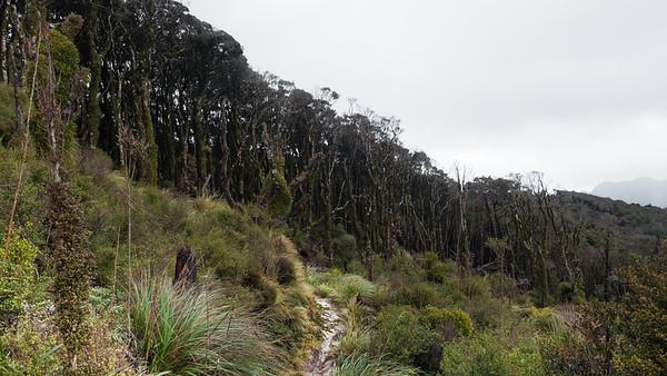 Whakanui Track