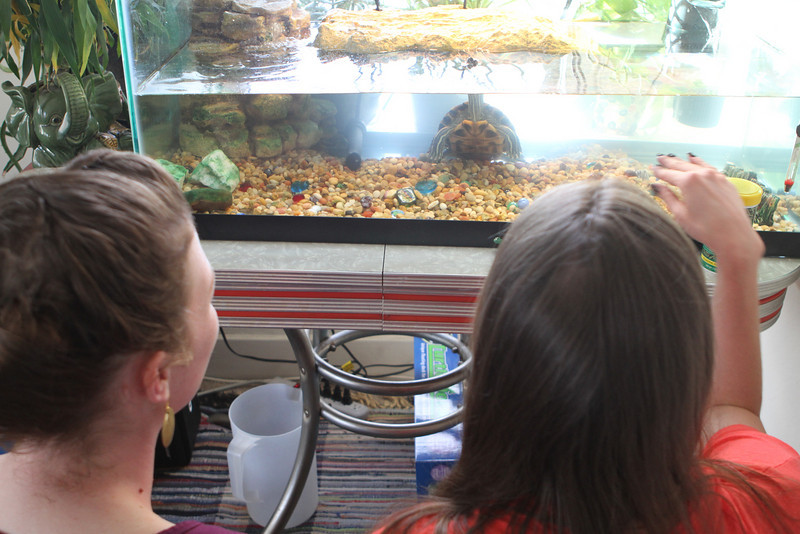 Merritt the Turtle enjoys his new super tank and his new little turtle buddy Oakland.