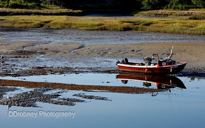 Stranded by low tide.