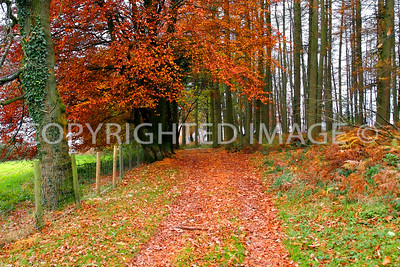 Woodland Ride, Late Autumn View, Welsh Newton Common, South Herefordshire