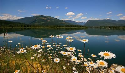 Bloemetjes in bloei @ Columbia River. Revelstoke, British Columbia, Canada.