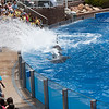 Dolphin during show,  SeaWorld, San Diego