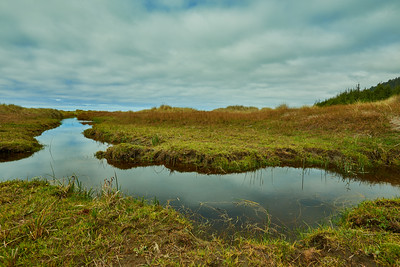 marsh along the Pacific Coast Trail