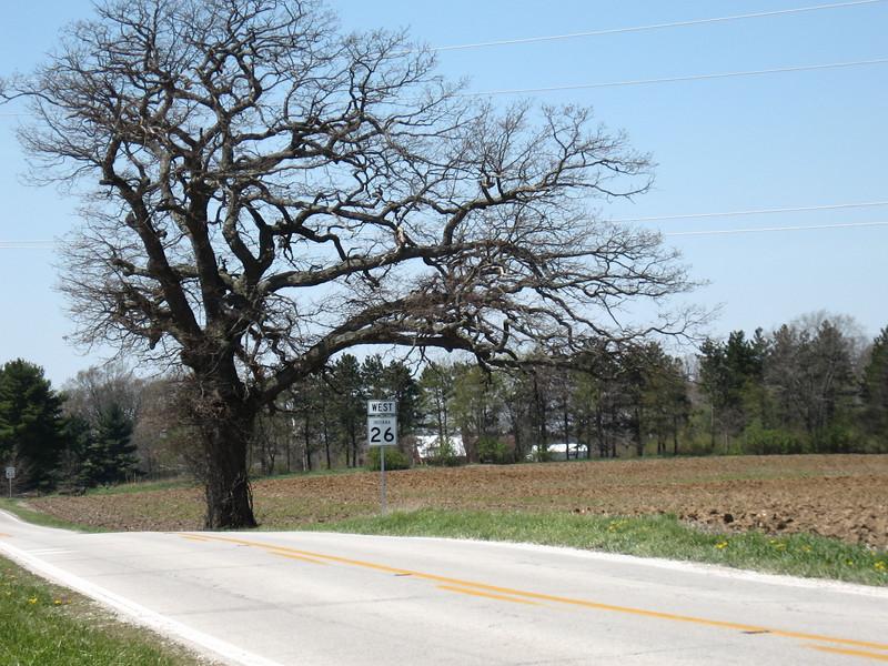 Oak tree on highway 26