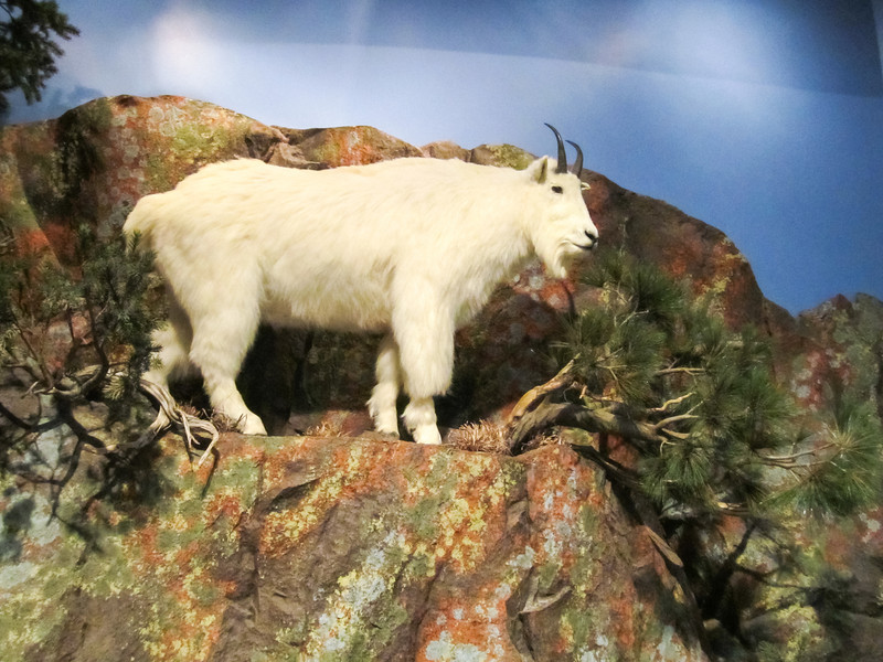 Draper Museum of Natural History, Buffalo Bill Historical Center