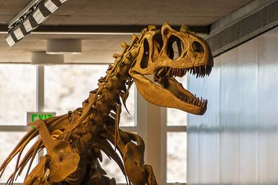Dinosaur NM