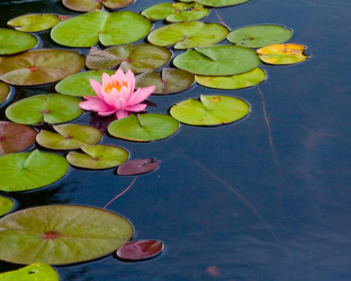 plum_oarchard_lake-3243